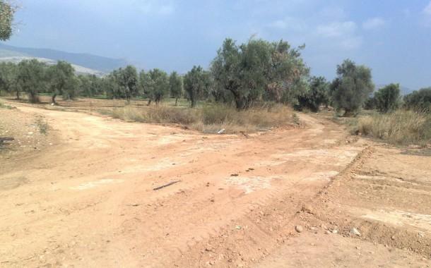 Ετοιμάζουν τους δρόμους για τις ελιές στον κάμπο