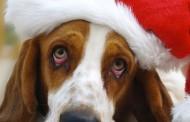 Οι γιορτές των Χριστουγέννων σου προκαλούν θλίψη και μελαγχολία;