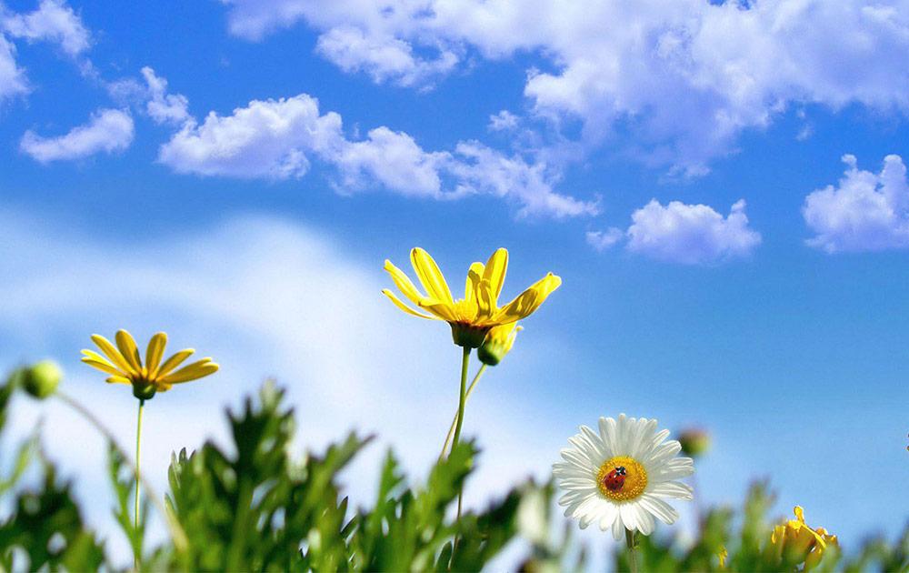 Oμήνας των λουλουδιών