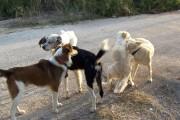 Πρόβλημα στον έλεγχο των ζώων συντροφιάς-στα αδέσποτα