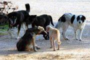 30.000 ευρώ για περίθαλψη αδέσποτων ζώων