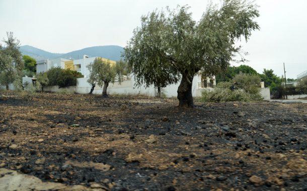 Υπουργείο Υποδομών: 607 αιτήσεις για επιδόματα πυρόπληκτων