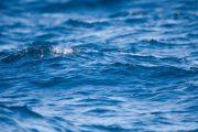 Επιφυλάξεις για τις μετρήσεις των θαλάσσιων υδάτων