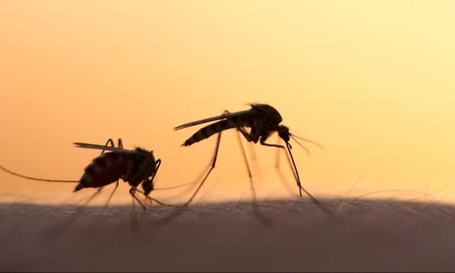 Ψεκασμός για τα κουνούπια αύριο Παρασκευή