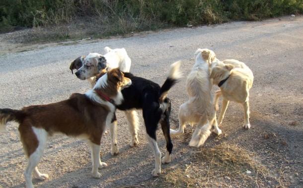 Συνάντηση για θέματα φιλοζωίας και κακοποίηση ζώων στην Περιφέρεια